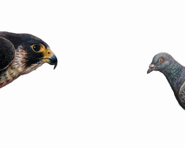 , 'Top Predator Falcon and Pigeon,' 2017, The Biscuit Factory