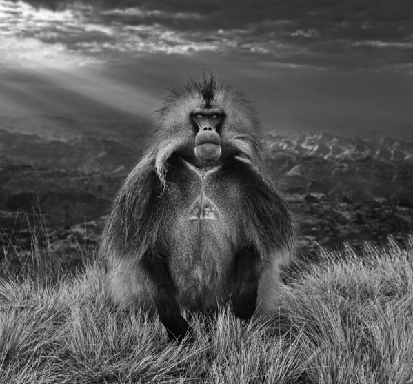 David Yarrow, 'Members Only', ca. 2018, Photography, Archival Pigment Print, Samuel Lynne Galleries