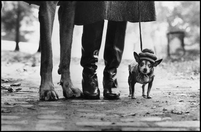 , 'Felix, Gladys & Rover,' 1999, Magnum Photos