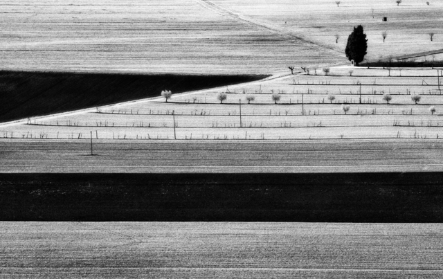 , 'Campagna Con Cipresso (Cypress in the Countryside),' Assisi 1992, Arthill Gallery