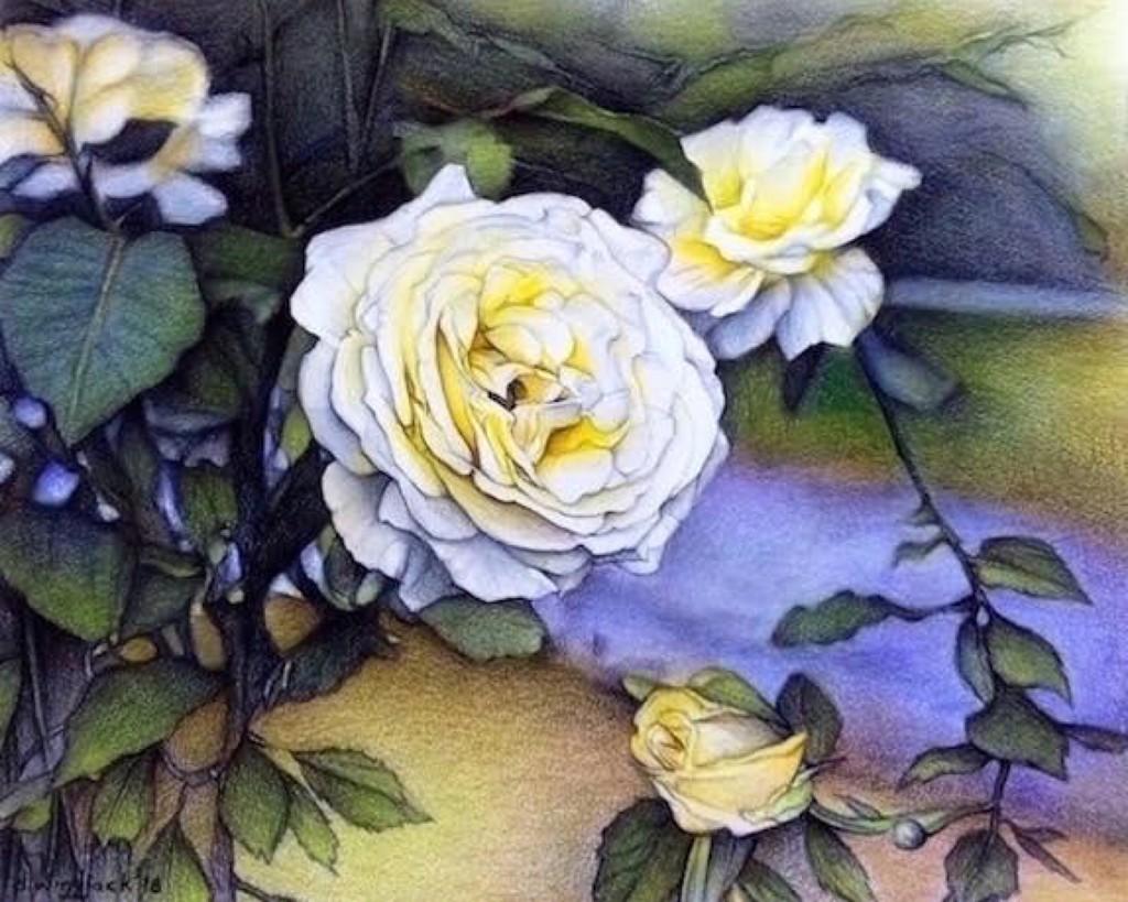 Alberta Rose ~ Coloured pencils ~ Darrell Windjack