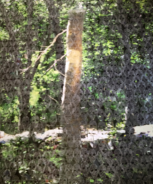 , 'Betula Pendula,' 2009-2016, Zilberman Gallery
