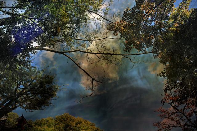 Yasuo Kiyonaga, 'Split of the forest 29', 2010, Photo Gallery Artisan