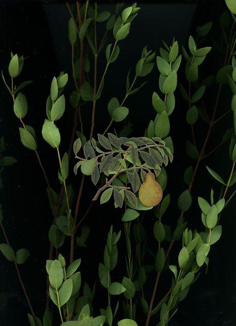 Chong Weixin, 'Specimen 6', 2014-2015, Galerie Steph