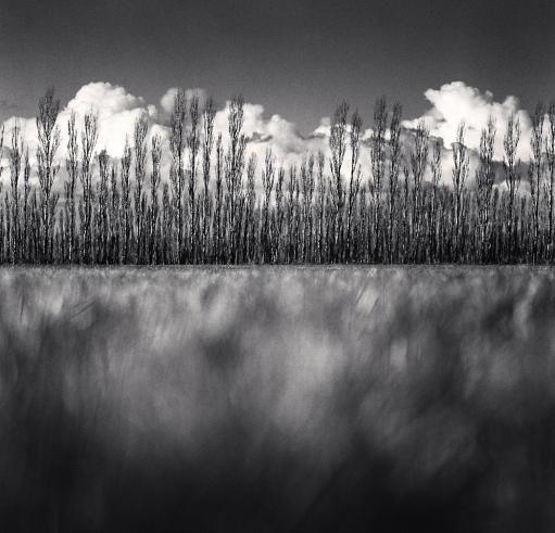 Michael Kenna, 'Poplar Trees and Cumulus Clouds, Kirwee, Canterbury, New Zealand', 2013, Weston Gallery
