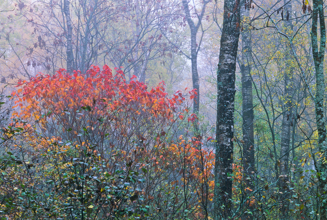 , 'Lake Superior Forest,' 2005, 555 Gallery