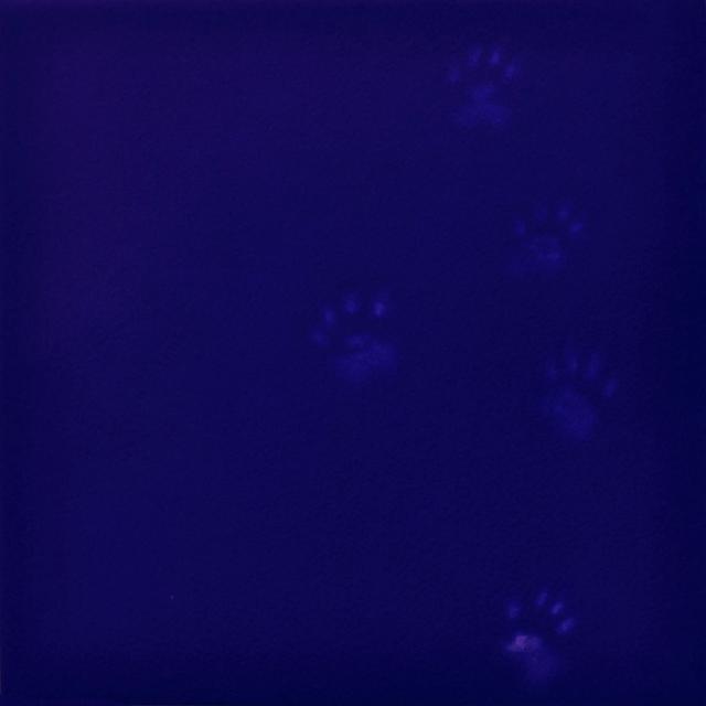 , 'Yves Klein's Dog,' , Sarah Wiseman Gallery