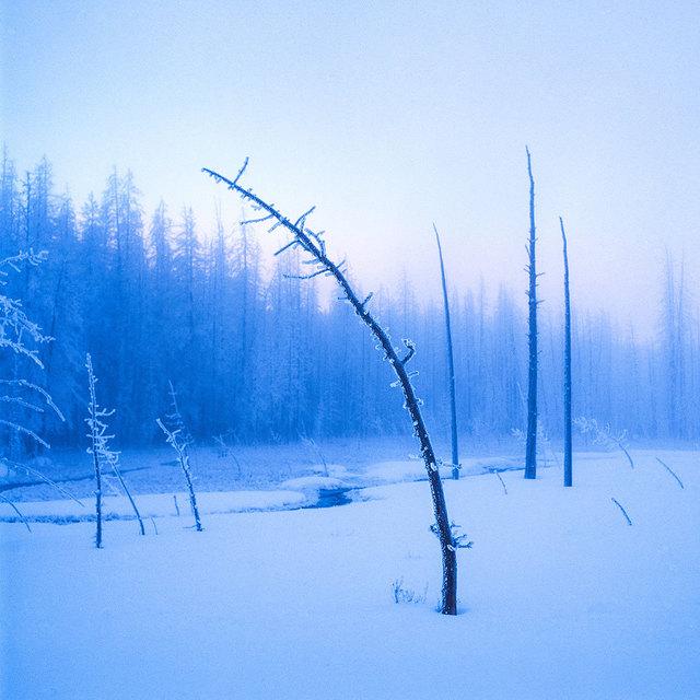 , 'FROZEN TREE ON TWILIGHT,' , ArtStar