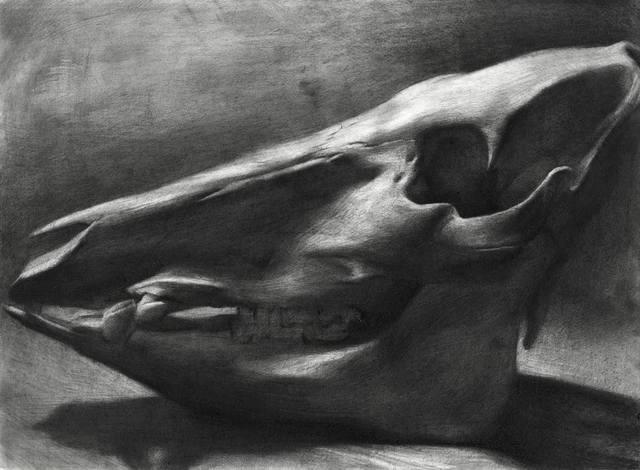 Evan Kitson, 'Boar Skull', 2018, IX Gallery