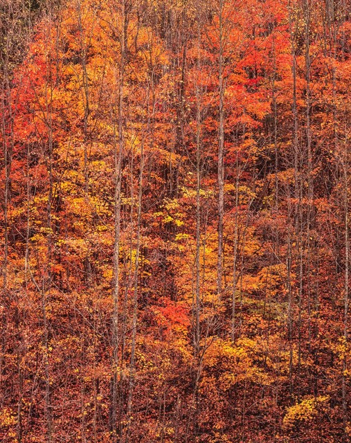 , 'Autumn Forest Sunrise, West Virginia,' 2017, Photography West Gallery