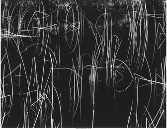 Reeds and Black Water