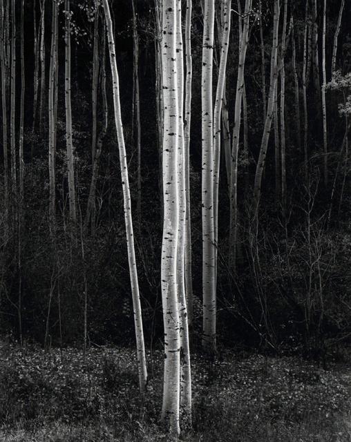 , 'Aspens (Vertical),' 1958, Etherton Gallery