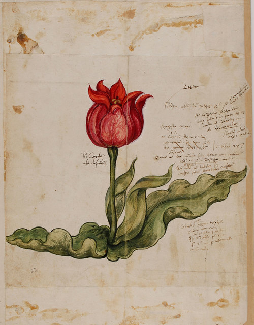 , 'Historia plantarum,' , Centre for Fine Arts (BOZAR)