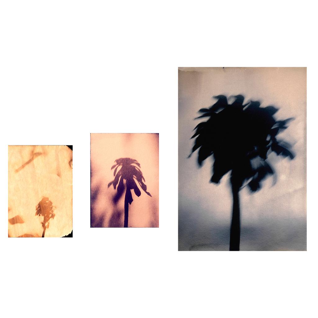 Little Palms and Big Flowers by Sayako Sugawara