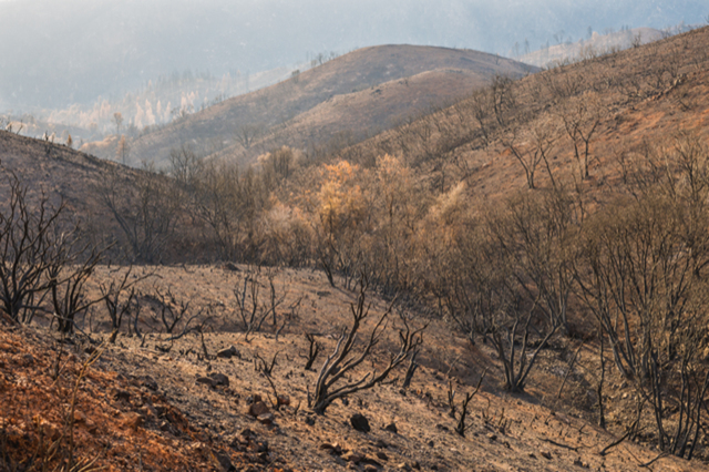 , 'Hard Seasons: Fire,' , Robischon Gallery