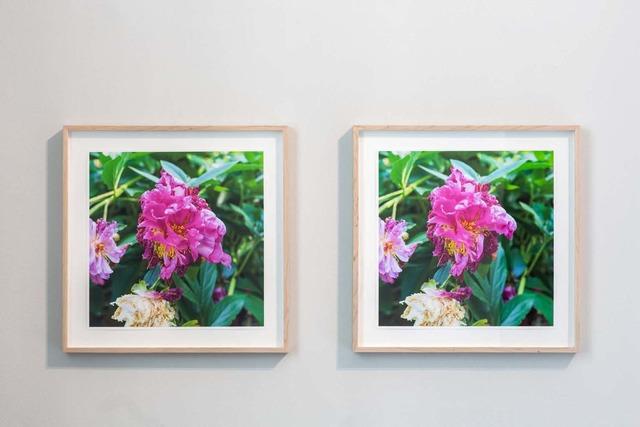 , 'Two Petals Fall (after Masaoka Shiki) ,' 2019, Galerie Nordenhake