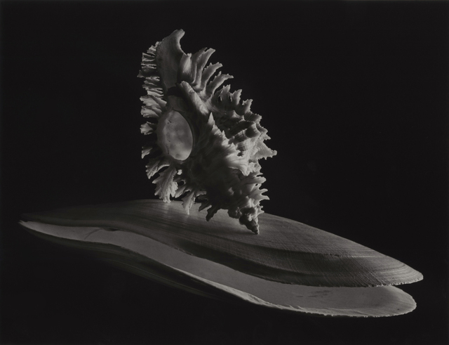 , 'Deep Sea Scallop,' 1943, Photography West Gallery