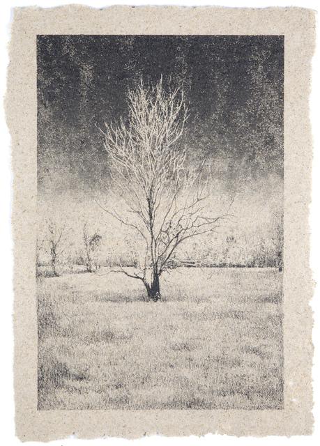 , 'Tree 13,' , Tracey Morgan Gallery