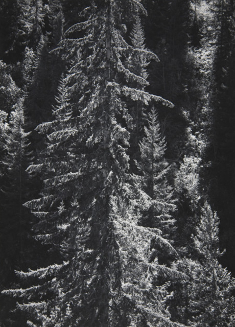 Ansel Adams, 'Park Creek Forest Into Sun, [Northwest] 4-NW-30, [North Cascades National Park], CA', 1958, Jackson Fine Art
