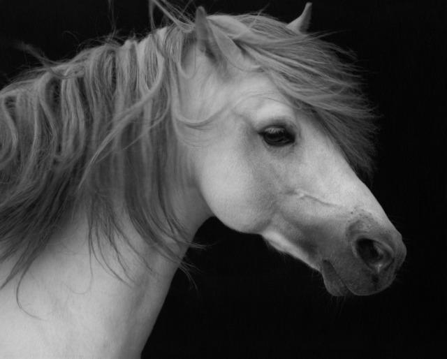 Sheila Rock, 'Horse #2', ElliottHalls