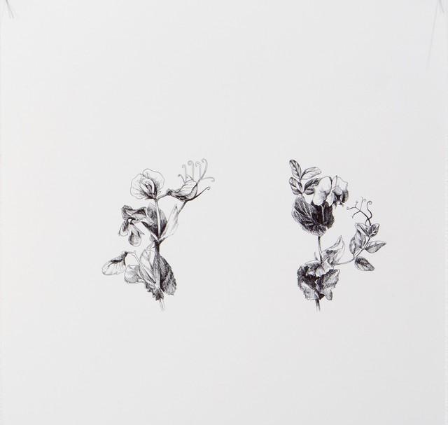 , 'Pysum Sativum 5,' 2016, Lucia Mendoza