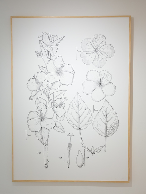 , 'PIT#1 HIBISCUS ROSA SINENSIS (BUNGA RAYA),' 2013, Chan + Hori Contemporary
