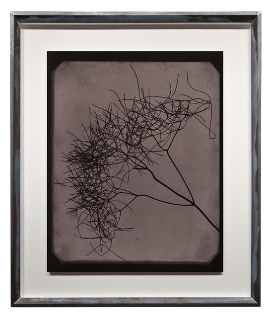 , 'Wild Fennel, circa 1841-1842,' 2009, Fraenkel Gallery