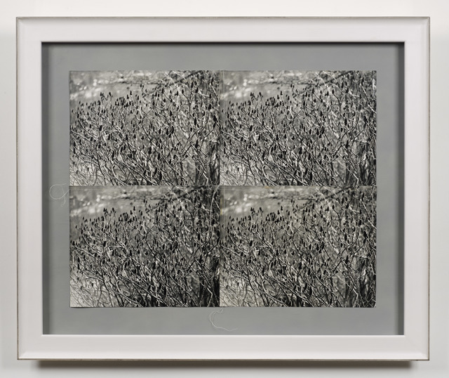Andy Warhol, 'Meadow', 1987, Photography, Gelatin silver print, DELAHUNTY