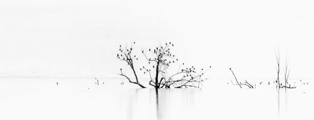 Brian Kosoff, 'Bird Tree', 2005, Gallery 270