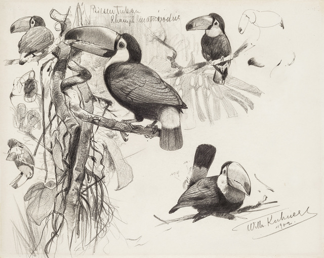 , 'Giant Toucan,' 1902, Kunkel Fine Art
