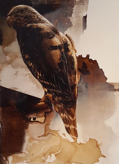 , 'Hawk,' 2016, Craig Krull Gallery