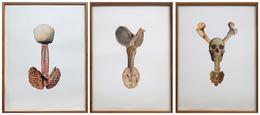 , 'Artéria epigástrica Picasso, Proeminência tireóidea Degas, Atlas,' 2012, Galeria Nara Roesler