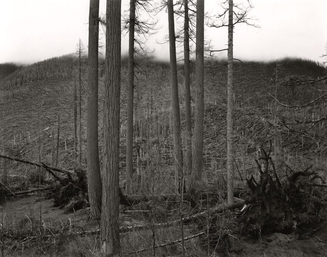 , 'Ryan Lake Area, Mt. St. Helens,' 1981, Rick Wester Fine Art