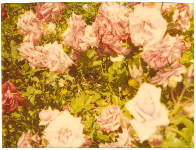 Stefanie Schneider, 'Rosegarden II', 2004, Photography, Nalog C-Print, hand-printed by the artist, based on a Polaroid, mounted on Aluminum with matte UV-Projection, Instantdreams