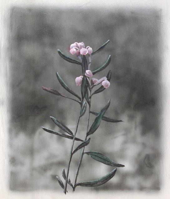 , 'Andromeda Polifolia,' 2019, Ani Molnár Gallery