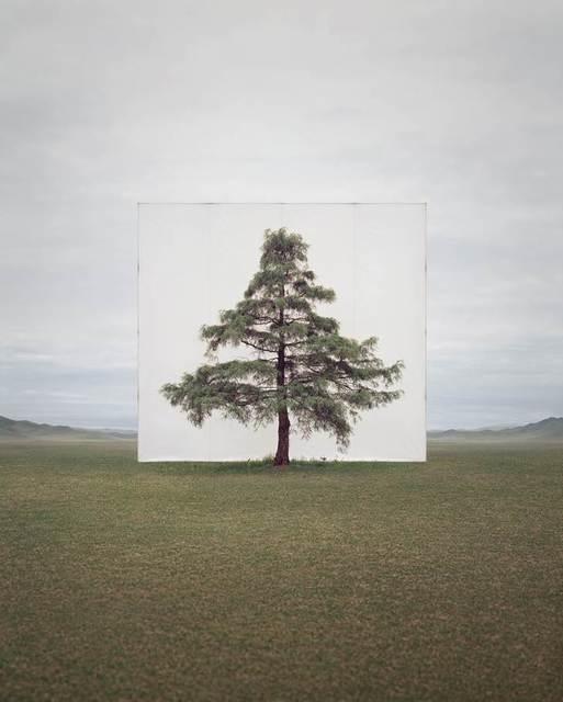 , 'Tree…#6,' 2013, Yossi Milo Gallery