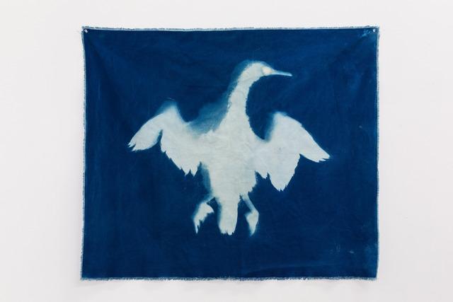 , 'Cormorant 2 (Straight of Magellan),' 2014, Nina Johnson