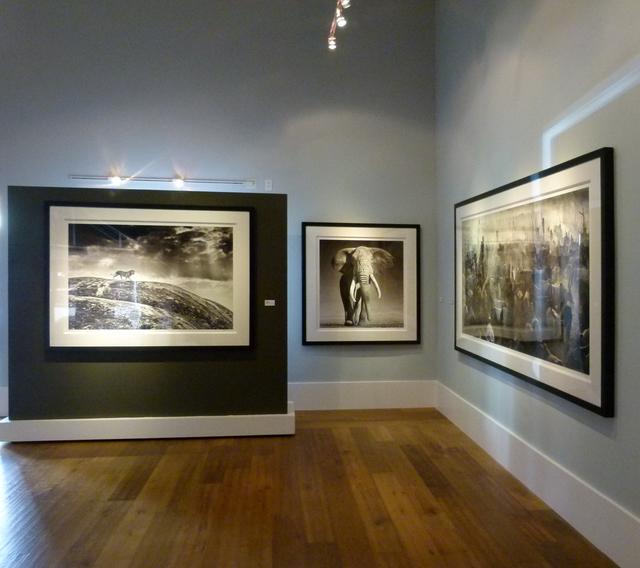 David Yarrow, 'The Don, Amboseli, Kenya', 2017, Photography, Archival Pigment Photograph, Holden Luntz Gallery