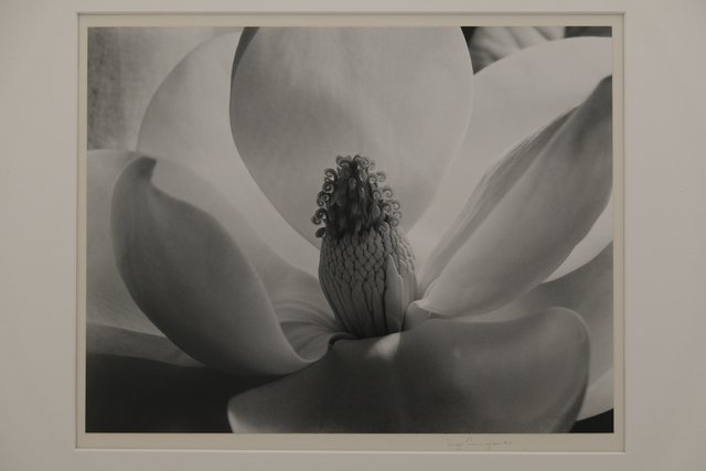 , 'Magnolia Blossom,' 1925, The Halsted Gallery