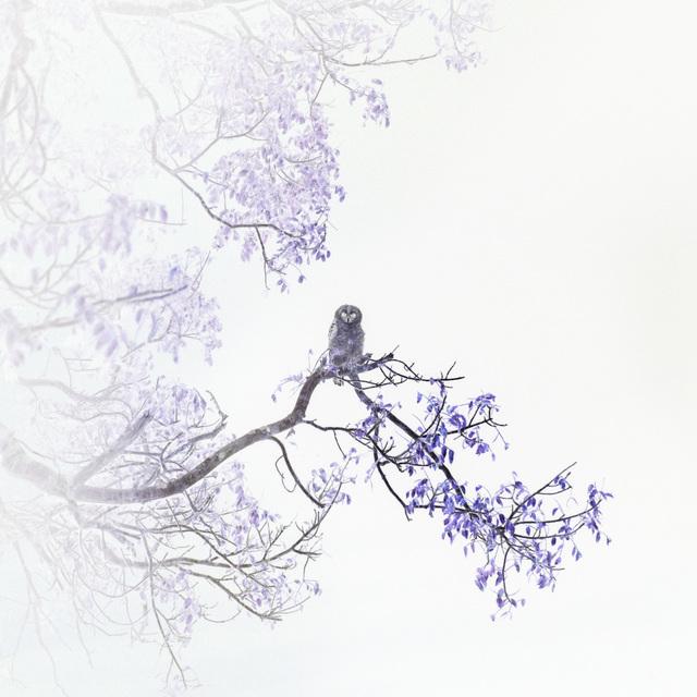 , 'Barred Owl,' 2019, Litvak Contemporary