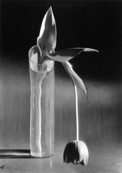 , 'Melancholic Tulip,' 1939, James Hyman Gallery