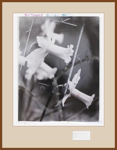 , 'What was his name?,' 2011, Galeria Filomena Soares