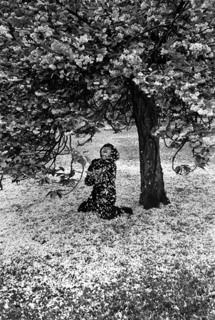 , 'Cerisier en fleurs,' 1983, °CLAIR Galerie
