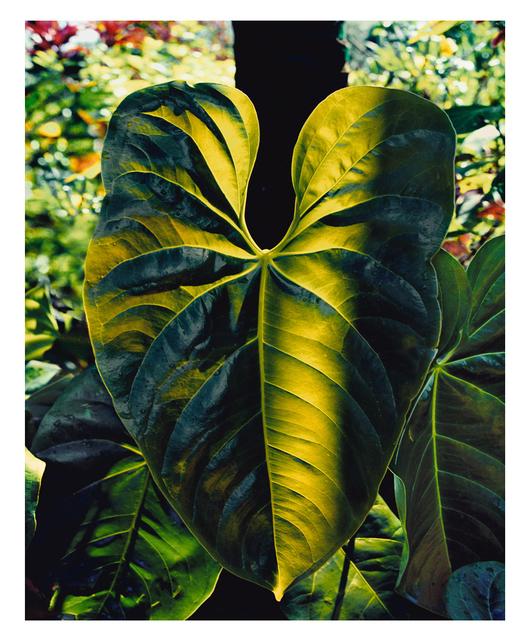 Gustavo Ten Hoever, 'La Hoja', 2005, ARC Fine Art LLC