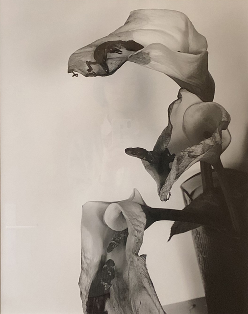 Nobuyoshi Araki, 'flower', 2012, Aura Gallery