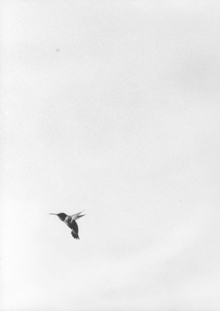 , 'Untitled (Colibri III),' 2017, Monica De Cardenas