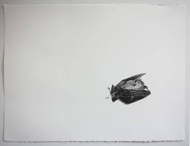 , 'Morcego [Bat],' 2015, Casa Triângulo