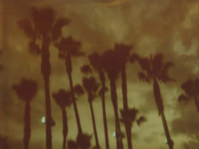 Stefanie Schneider, 'Palm Trees at Night (Stranger than Paradise)', 1999, Photography, Analog C-Print, hand-printed by the artist on Fuji Crystal Archive Paper, based on a Polaroid, not mounted, Instantdreams
