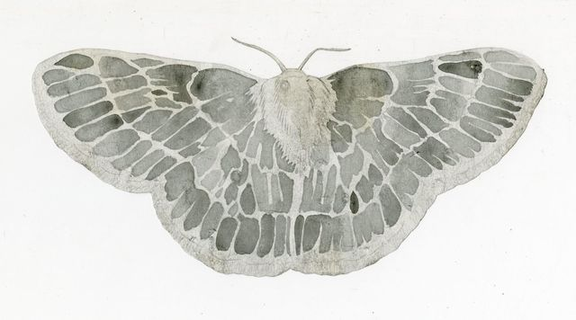 Jim Holyoak, 'Emerald Moth (Cut Out)', year unknown, Drawing, Collage or other Work on Paper, India ink, bG Gallery