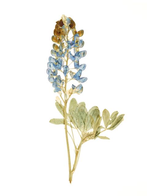 Steven Crawford, 'Translucent Flora 2016 - Plate 1', 2016, Children's Museum of the Arts Benefit Auction